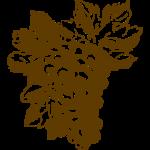 uva-largo-trasp